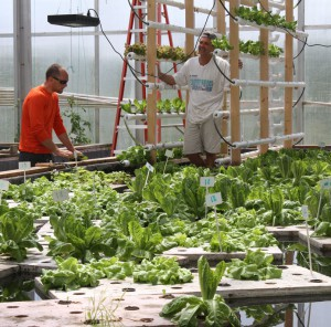 Mike Mageau (right) and Baylor Radtke with their floating lettuce in the Victus Farms greenhouse.