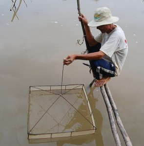 A shrimp farmer named Sung pulls a basket loaded with shrimp from the bottom of one of his ponds. (Photo: Christopher Johnson)